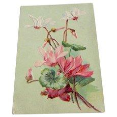 Vintage 1908 Floral Postcard