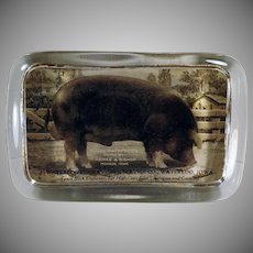 Vintage Glass Paperweight – Old Waterloo Advertising with Royal Pathfinder Duroc Pig