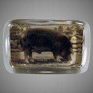 Vintage Glass Advertising Paperweight with Waterloo Royal Pathfinder Duroc Pig