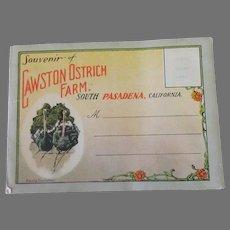 Vintage South Pasadena Cawston Ostrich Farm Advertising Postcard Mailer