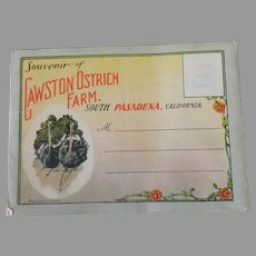 Vintage South Pasadena Cawston Ostrich Farm Advertising Postcard Mailer