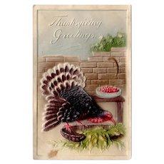 Vintage 1911 Embossed Turkey Thanksgiving Postcard – Made in Germany