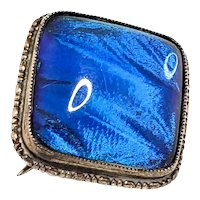 Antique 1920s Art Deco Morpho Menelaus Butterfly Wing and Sterling Silver Brooch Pin