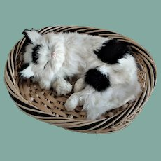 Adorable Old Cat in Basket