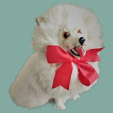 Antique French Big Spitz Salon Dog