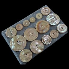 """A Card of 15 Antique Victorian Carved Mother of Pearl Buttons 9/16"""" to 1 7/16"""""""