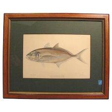 1899 Fish Chromolithograph C.B. Hudson Runner Framed