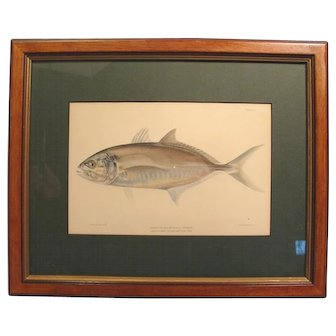 1899 Fish Chromolithograph C.B. Hudson Runner Framed