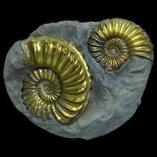 Pyritized Ammonite, Cluster of Two; Jurassic; Germany