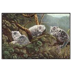 """Cats""  (1910')"
