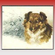 """""""Lassie""""  (1891)"""