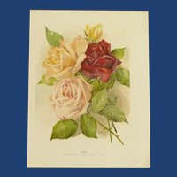 Roses Painted on Print Marie Low 1896