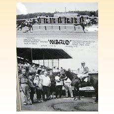 Laurel Race Track MD..Large B/W Glossy Photo Of Winner.. Nibrud..08/06/63