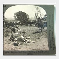 Stereo View of Cowboy Roping Cow