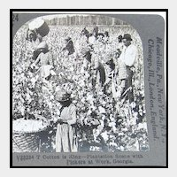 Keystone Stereo View of Black Americans Picking Cotton