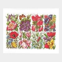 German Die Cuts of Beautiful Flowers
