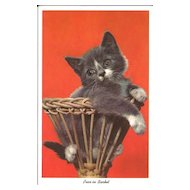Postcard of Grey Kitten in a Basket