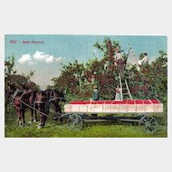 Occupational Postcard of Apple Harvest