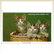 Postcard Three Cats in Basket Greetings from Chetek, Wisconsin