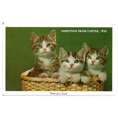 Postcard Three Cats in Basket Greetings from Chetek, Wisconsin