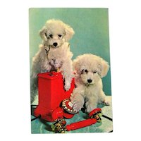 Poodle Puppies Postcard / Dogs with Telephone / Mischevious Puppies