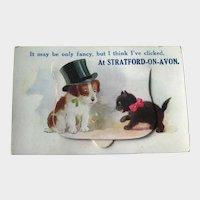 Rare Pocket Novelty Postcard / Cat and Dog / Stratford on Avon