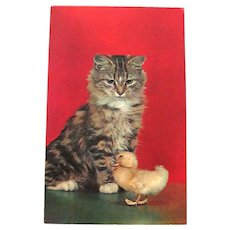 Unused Kitten and Duckling Postcard / Color by Ted Koepper / Plastichrome Card