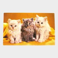 Three Little Kittens Postcard / Vintage Cats Card / Cat Lovers Postcard