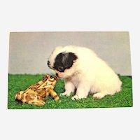 Unused Puppy and Frog Postcard / Animal Postcard / Plastichrome Card