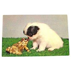 Puppy and Frog Postcard / Animal Postcard / Plastichrome Card