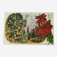 California Orange Grove / Merry Xmas / Panama California International Exposition / Vintage Ephemera