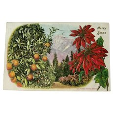 California Orange Grove / Merry Xmas / Panama California International Exposition / Vintage Ephemera