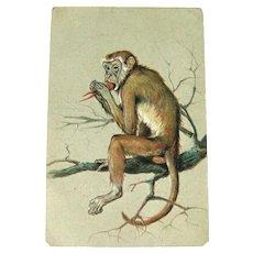 Monkey Eating Dinner - Monkey on Branch - Nature Postcard - Vintage Postcard - Collectible Postcard