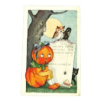 RARE Whitney Pumpkin Girl Halloween Postcard - Crow Owl Black Cat and Spider - Collectible Halloween