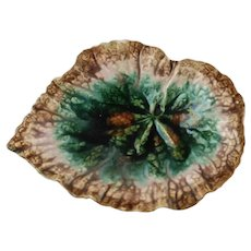 Antique Griffen Smith and Hill Etruscan Majolica Begonia Leaf Dish