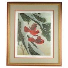 Vintage John Ruthven Signed and Numbered Framed Limited Edition Songbird Series Cardinal Richmondena Cardinalis