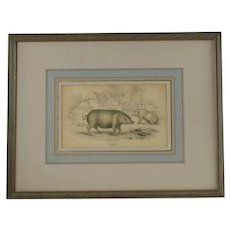 Antique Common Hog Framed Hand Colored Engraving by WH Lizars