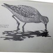 Lemuel T. (Lem) Ward Original Pencil Sketch Dowitcher Shorebird Signed