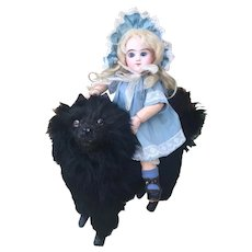 RARE French Black Dog Candy Container Doll Companion. Spitz, Pomeranian.