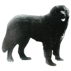 Newfoundland Dog Vintage Animal Book Dog Lovers Gift