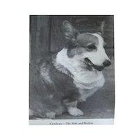 The Queening Of Ceridwen Corgi Book - Corgi Dog Owners - Dog Lovers Gift