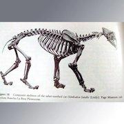Rancho La Brea -- A Record of Pleistocene Life In California