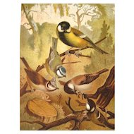 1885 Chromolithograph Bird Print by Louis Prang Titmice / Home Decor / Wall Hanging / Office Decor