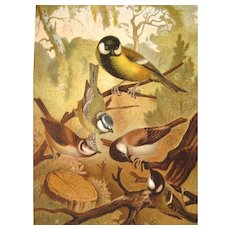 1885 Chromolithograph Bird Print by Louis Prang Titmice / Home Decor / Wall Hanging / Office Decor