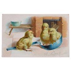 Easter Postcard by Tucks Chicks in Frying Pan