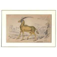 19th Century Engraving by Lizars, Matted, THE ALGAZEL