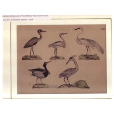 19th Century Wildlife Lithograph by Friederich Strack