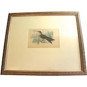 Beautiful Hand-Colored Engraving of Hummingbird