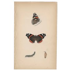Lovely Hand-Colored Engraving Red Admiral Butterfly