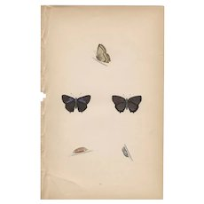 Lovely Hand-Colored Engraving Butterfly Purple Hairstreak, Morris